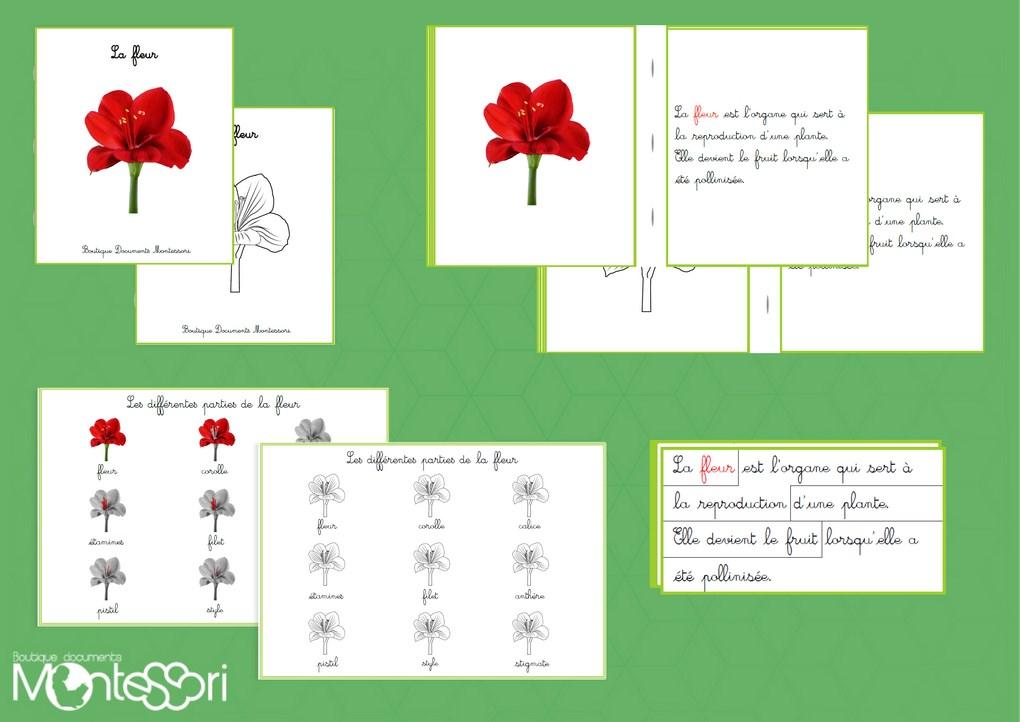 Boutique documents montessori for Livret des fleurs